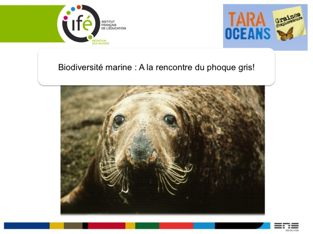 Rencontres internationales biodiversite marine